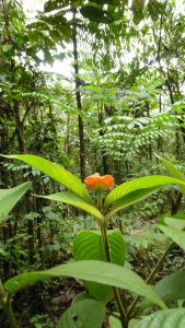 """Labio de novia"" plant. Photo: F. Sammarco"