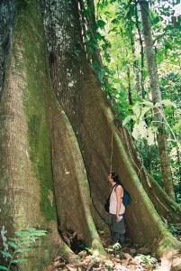 "The ""Lupuna blanca"" master tree, in the Amazon rainforest of Peru. Photo © El Mundo Magico 2000-2016"