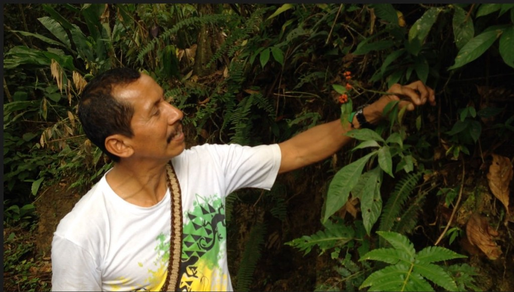 Taita Victoriano explaining the medicinal properties of plants encountered during the excursions in the wilderness. Photo © El Mundo Magico 2015