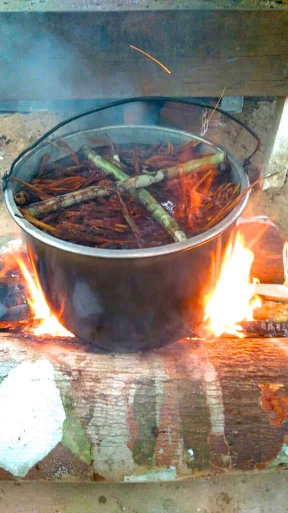 Ayahuasca cooking. Photo: C. Hoyos