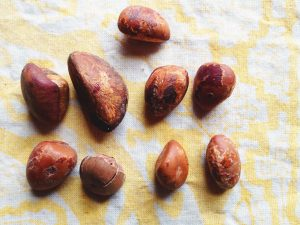 Camalonga seeds (paired 'male' and 'female' ones). Photo: F. Sammarco