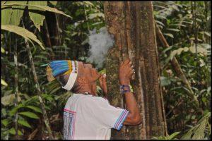 Don Sixto offering Mapacho smoke to the Remocaspi teacher tree. Photo: C. Hoyos.