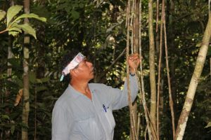 Don Clever by a Wambe jungle vine in the rainforest compound surrounding Ayahuma.