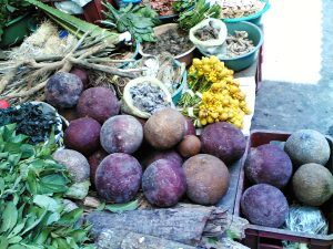 The cannon ball-shaped fruits of the Ayahuma master tree. Photo: F. Sammarco