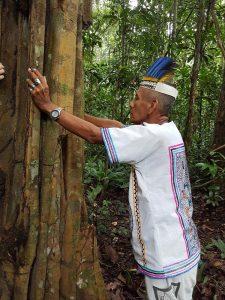 Shamanic ritual by a Remocaspi teacher tree with Don Sixto. Photo: Trenton Doyle.