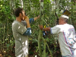 Shamanic ritual by a Chullachaki caspi teacher tree, with Don Sixto. Photo: Trenton Doyle.