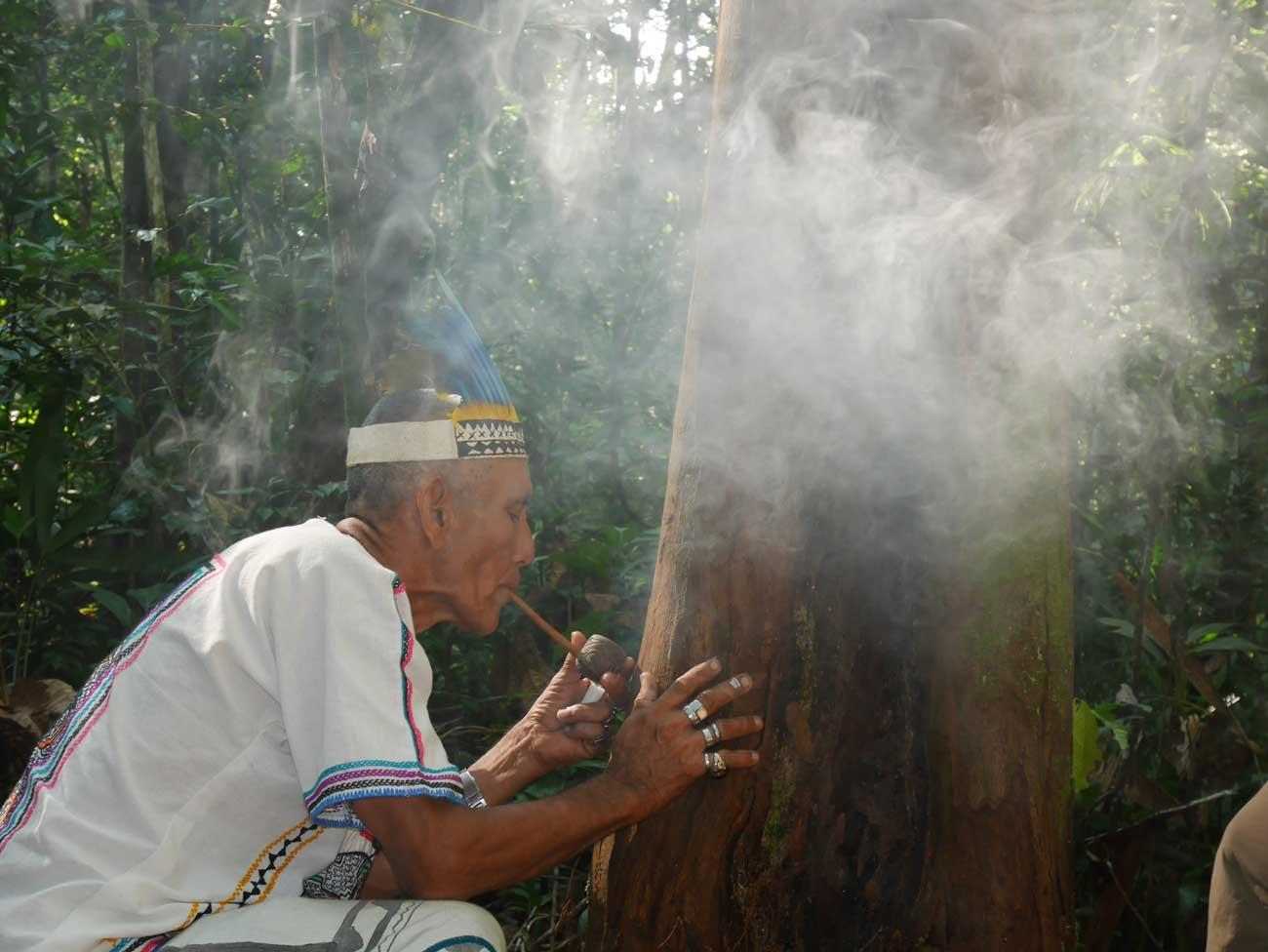 Ayahuasca, San Pedro and shamanic diet apprenticeship