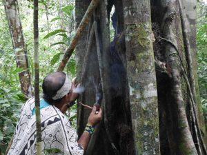 Offering Mapacho smoke to the Renaco teacher tree. Photo: C. Hoyos