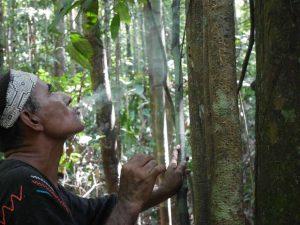 Don Guido offering tobacco smoke to Huarmi Renaco, the vine of love.