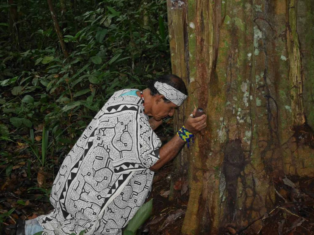 Ayahuasca and palero master shaman Don Guido paying homage to the Remocaspi master tree, in the Amazon jungle.