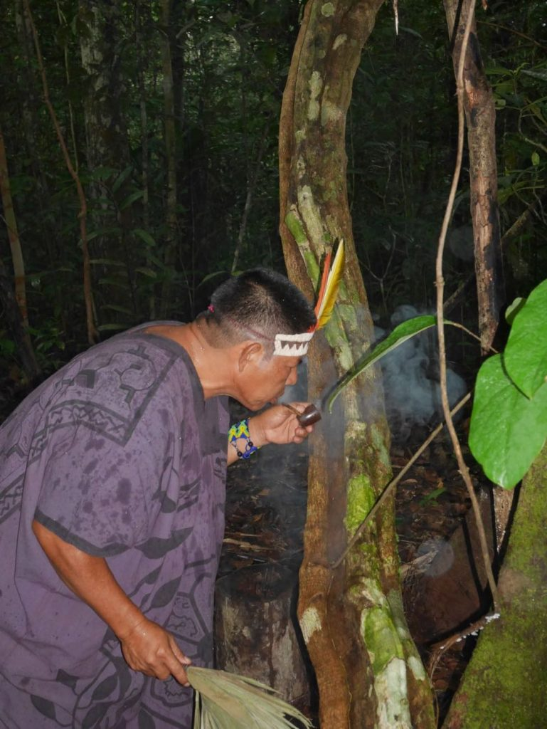 Ritual offer of Mapacho smoke to a giant black Ayahuasca vine growing wild in the Amazon jungle