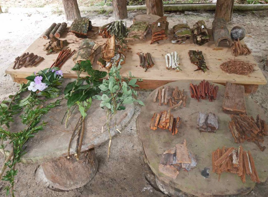 Some of the master trees, vines and teacher plants used by Don Armando in the making of the concentrated brew taken during the shamanic dieta.