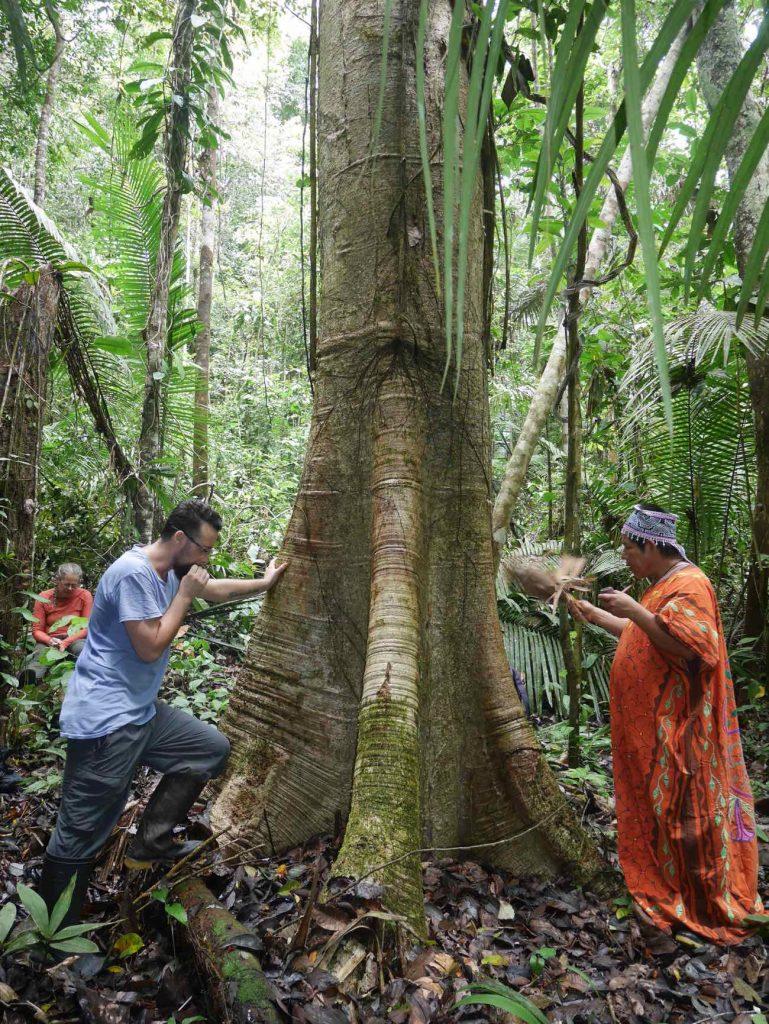 Shamanic ritual with the Puca Lupuna master tree, in the Peruvian Amazon jungle, with Don Armando
